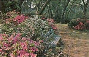 Descanso botanical Gardens