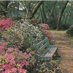 Descanso botanical Gardens – La Cañada