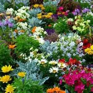 Im eigenen Garten Geld sparen