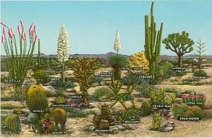 Gartenkunst - Architektonische Gestaltung begrenzter Flächen