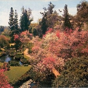 Huntington Botanical Gardens – USA