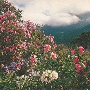 Jardim Botanico Funchal – Madeira
