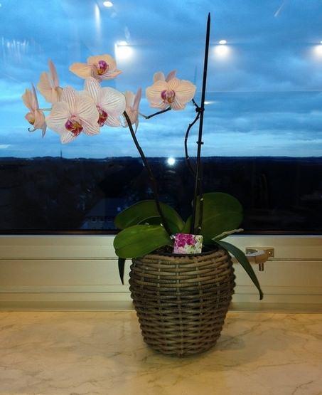 Orchideen Pflanzen im Büro von e-Trado