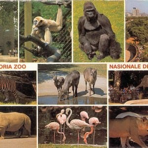 Pretoria Zoo – Johannesburg Zoo