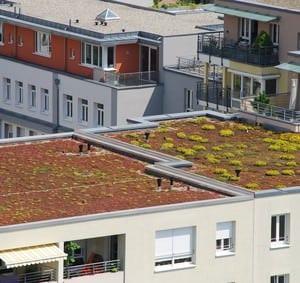 Dachbegrünung in Innenstädten