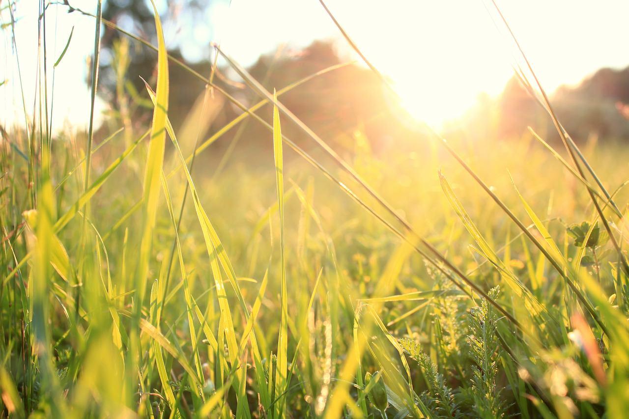 grass-828223_1280