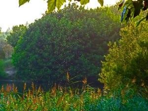 Mücken als Plagegeister im eigenen Garten